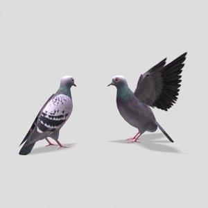 3d pigeon bird