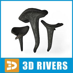 max black trumpet mushroom