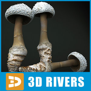 3d coker amanita mushroom