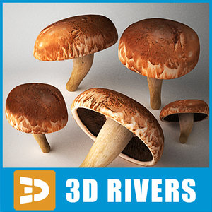 maya portobella mushroom