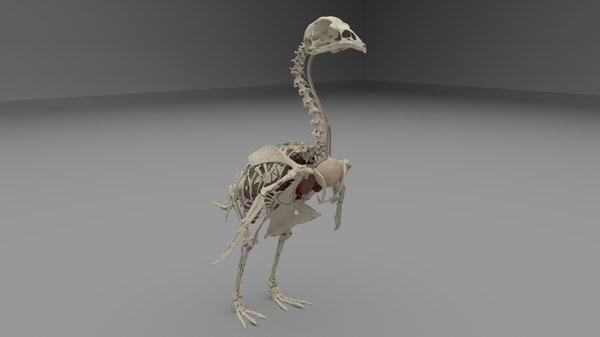 poultry chicken anatomy heart 3D