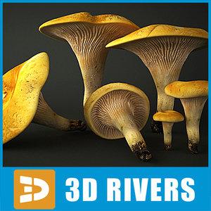 3dsmax chanterelle mushrooms