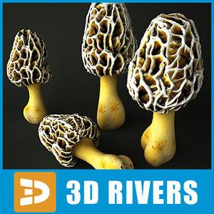 white morel mushroom 3ds