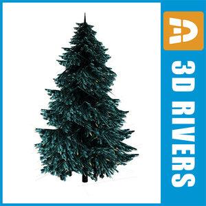 blue spruce trees 3d model