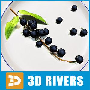 3d model of bird cherry berries