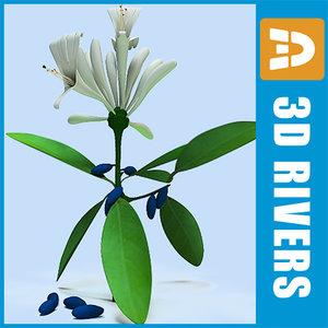 3d model honeysuckle berries flowers