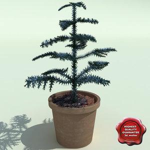 3d c4d araucaria heterophylla