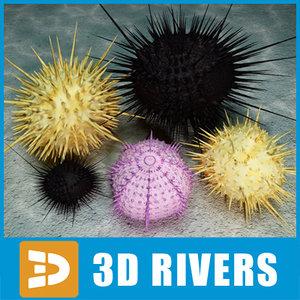 3d urchins sea set