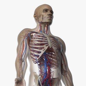3D skin african male skeleton