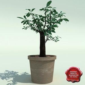 3d bonsai tree v3