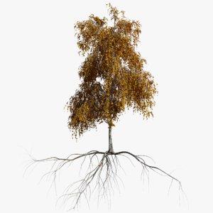 birch autumn 1 tree 3D