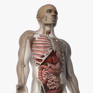 3D skin african male skeleton model