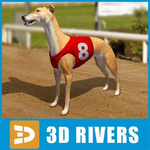 3d model greyhound dogs