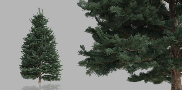 3D pack pine trees nature model