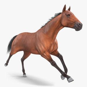running bay horse racing 3D