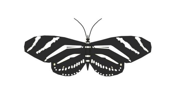 black butterfly model