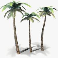 ready palm tree 3D model