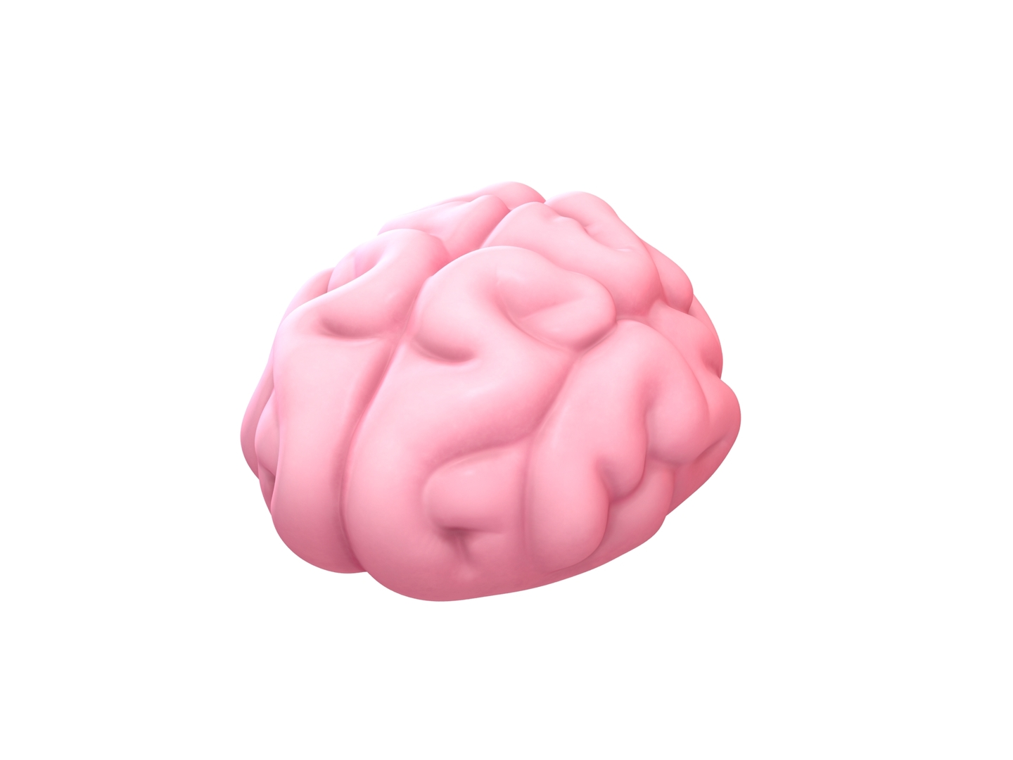 3D brain cartoon model