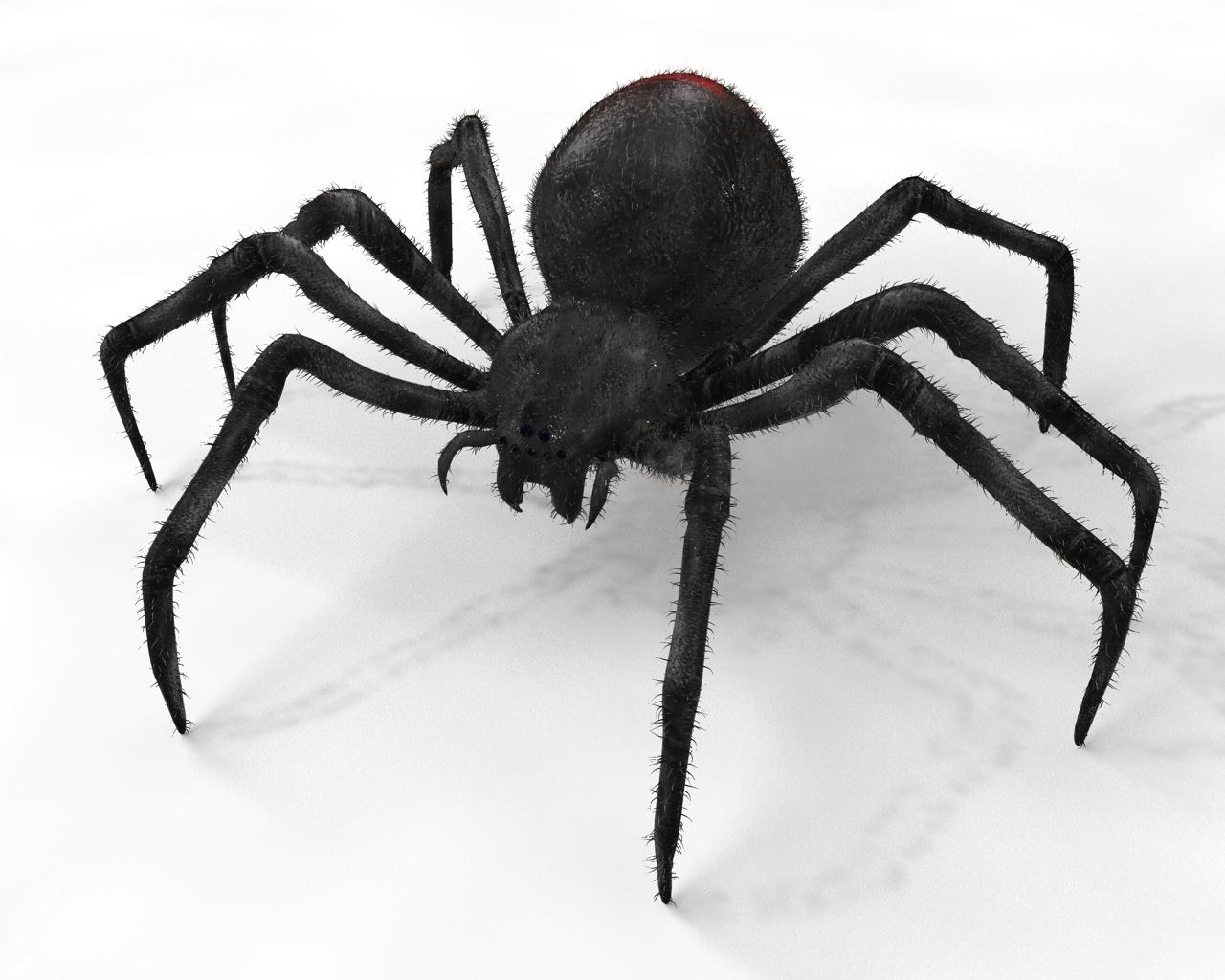 3D black widow spider
