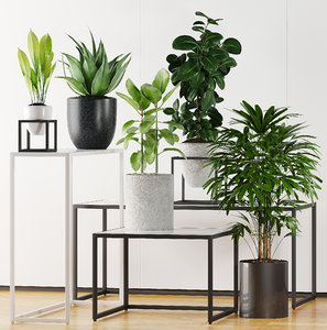3D plants 203 indoor