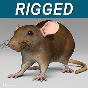 3d brown rat model