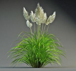 pampas grass 3d model