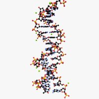 3D model double helix dna molecule