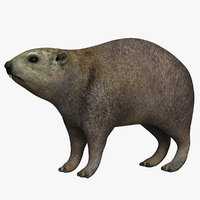rock hyrax 3D model