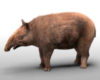 3D tapir rigged hair