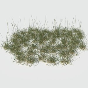 perennial ryegrass pack model