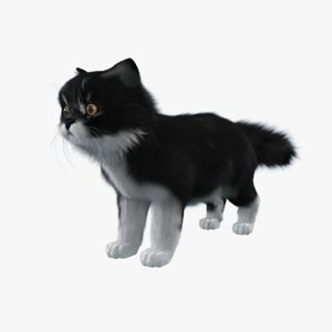 cat fur model