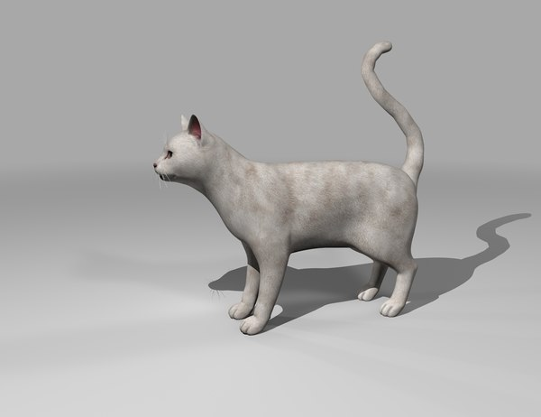 white catty rigged gift 3D model