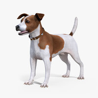 3D model jack russell terrier spotted