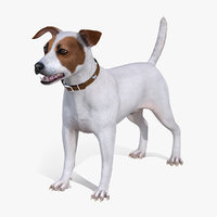 white jack russell terrier 3D