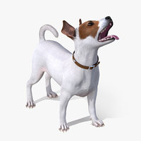 3D white jack russell terrier