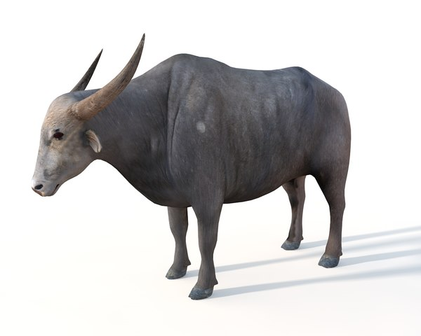 3D buffalo animal mammal model