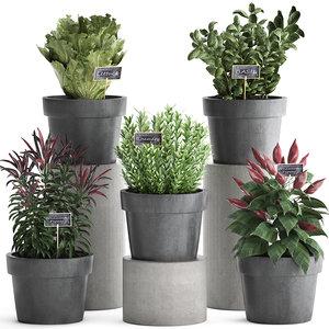 3D decorative plants kitchen