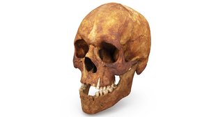 human skull scanned 3D
