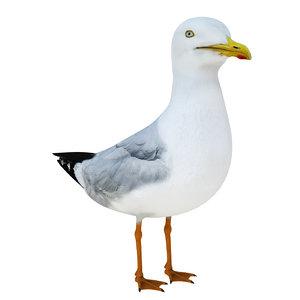 3D sea gull