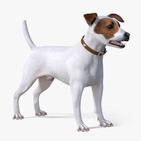 3D jack russell terrier white