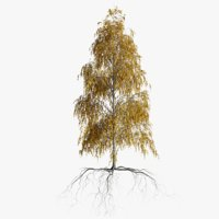 3D model birch autumn 3 tree