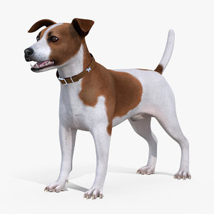 spotted jack russell terrier 3D