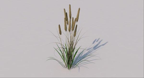 grass wheat 3D