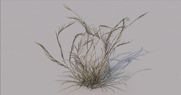 3D grass wild model