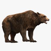 bear fur model