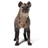 3D hyena production