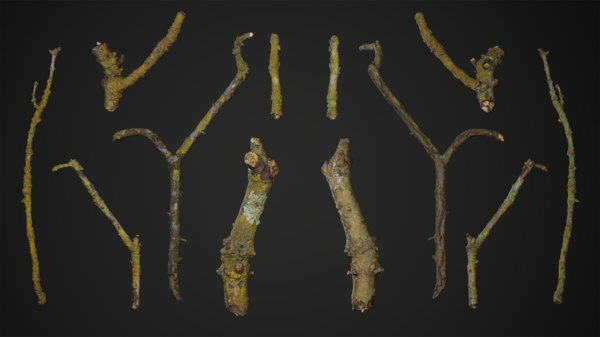 tree branches model
