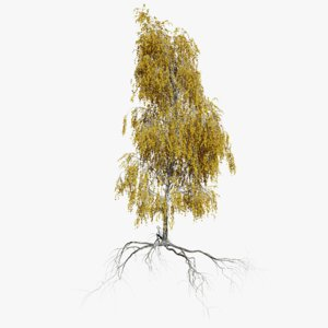 birch autumn 4 tree model