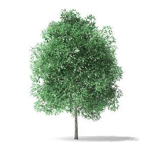green ash tree 4m 3D model