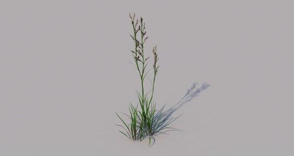 flora grass nature model